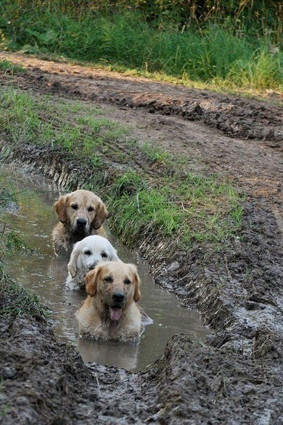 17-Dogs-Water