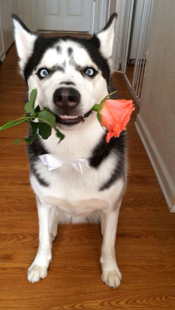 17-Valentines-Day