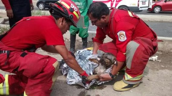 Firefighters Rescue Dog Drowning in Retention Pond