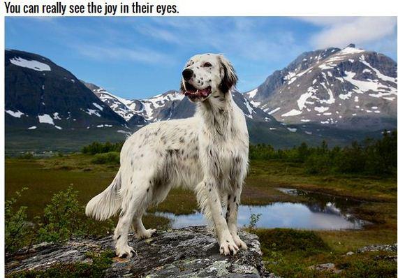 19-Inspiring-Dogs