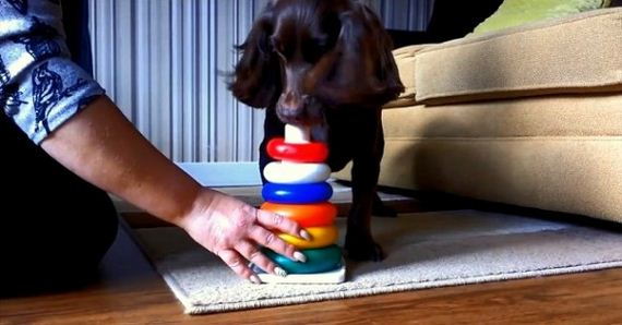 Smart Cookie Learns a New Trick Every Day for Charity