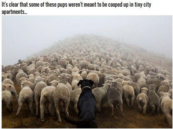 20-Inspiring-Dogs