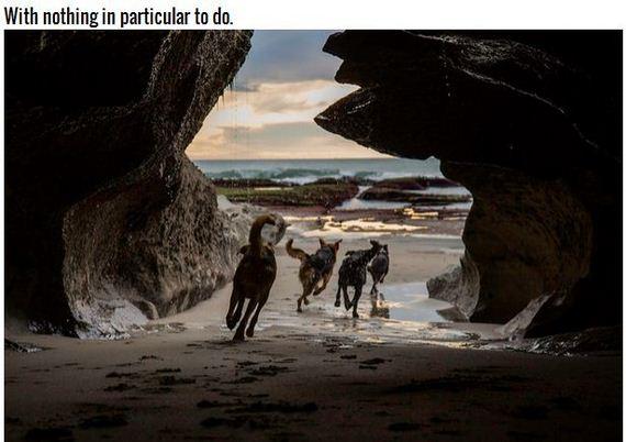 21-Inspiring-Dogs