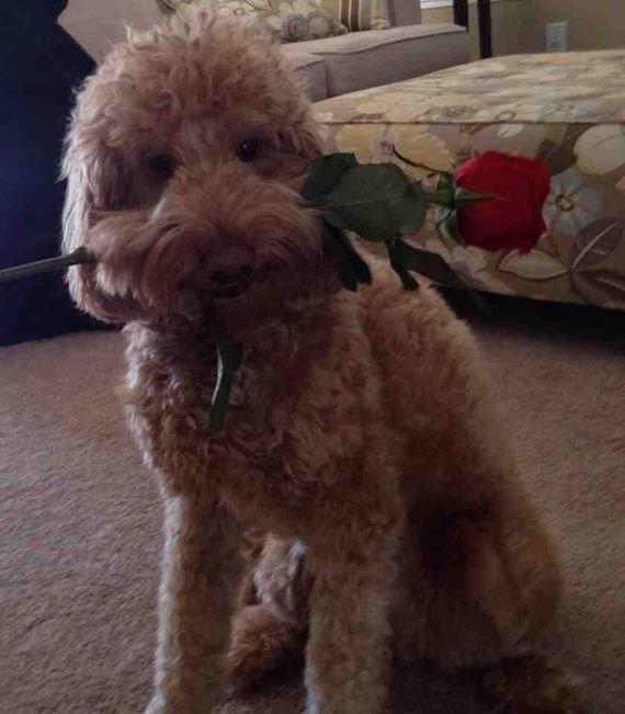 21-Valentines-Day
