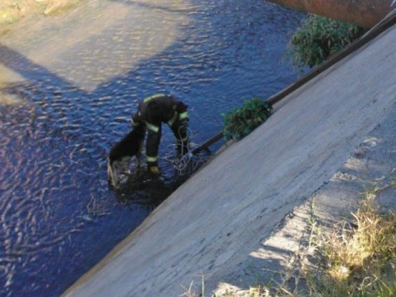 Firefighters Save Stray German Shepherd Trapped in Canal