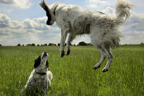 22-Inspiring-Dogs