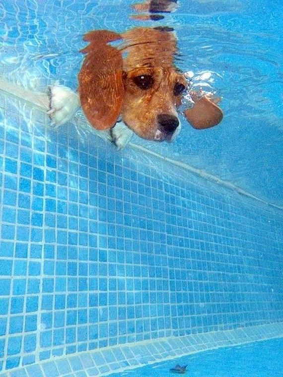 23-Dogs-Water