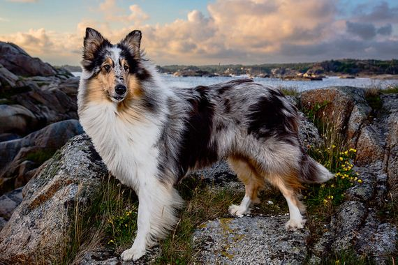 25-Inspiring-Dogs