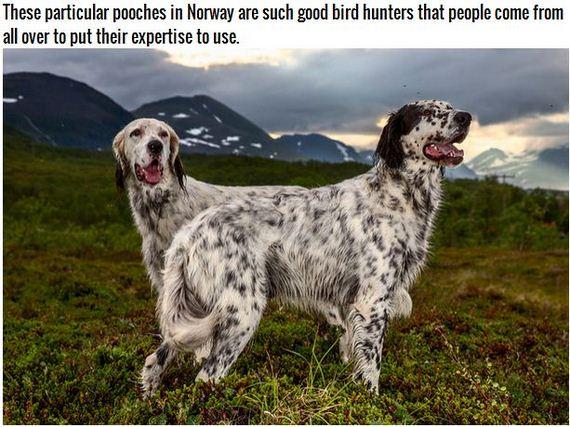 27-Inspiring-Dogs