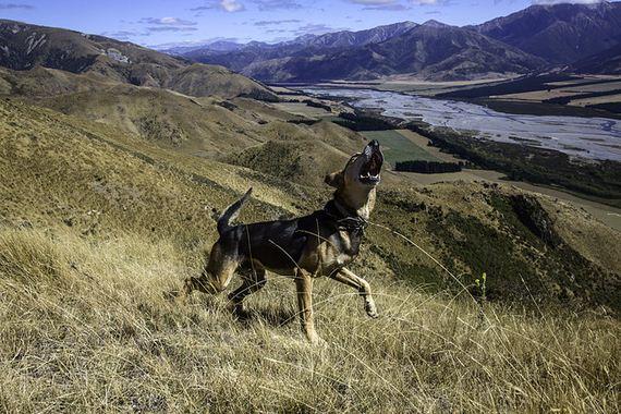 28-Inspiring-Dogs