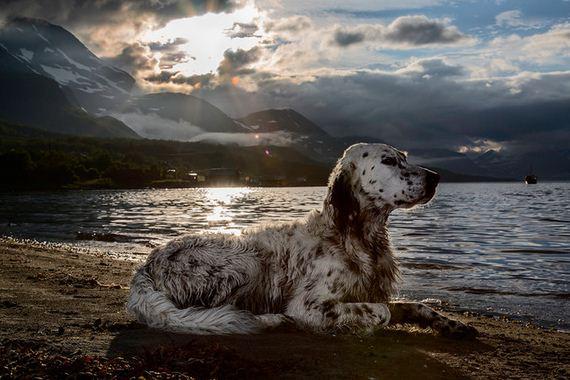 29-Inspiring-Dogs