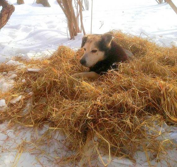 Woman Sleeps in Freezing NYC Park to Save Senior Feral Dog