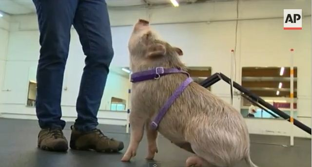 You Won't Believe Who Shows Up At Dog Training And Fits Right In