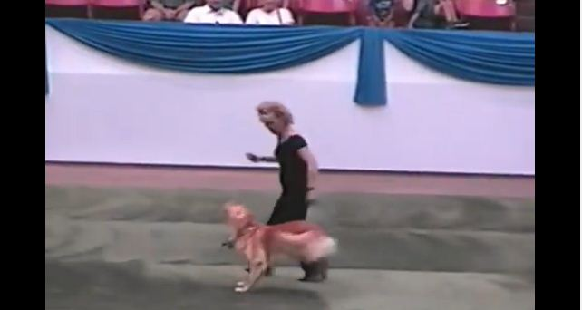 "Carolyn Scott and Her Golden, Rookie, Dance to Grease's ""You're the One That I Want"""
