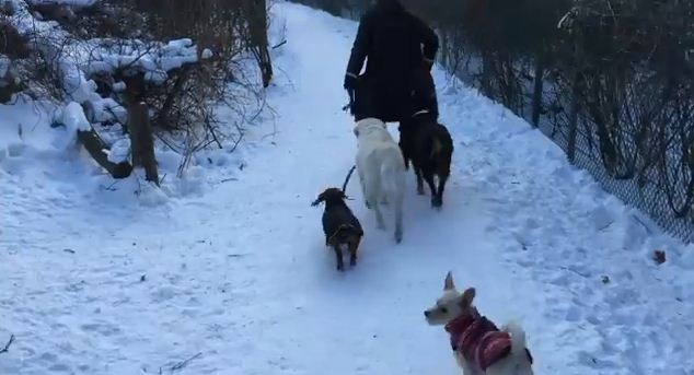 The Best Dog Walker In The World Is Probably…Your Other Dog! Genius.