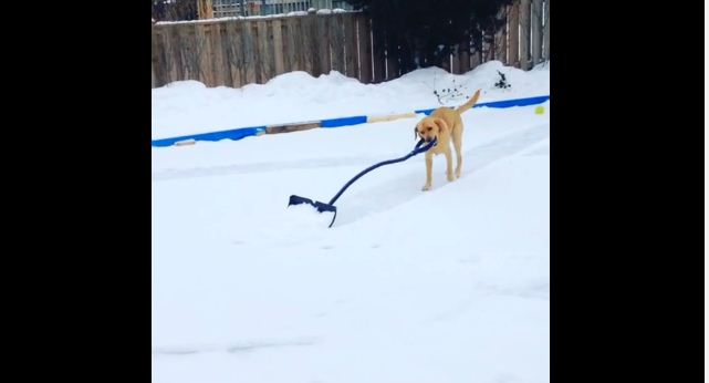 Winter Would Be 100x Easier If We All Had This Genius, Super Helpful Dog