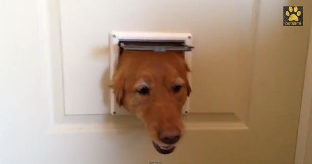 After They Installed A Cat Flap, Their 3 Hilarious Pooches Went Crazy For It