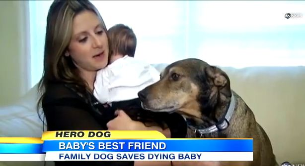 Dog Wakes Owners And Saves Baby