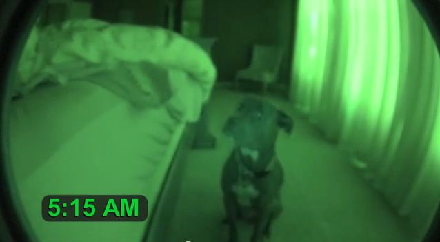 He Setup a Night Vision Camera To Document His Dog's Daily Routine. Hilarious!