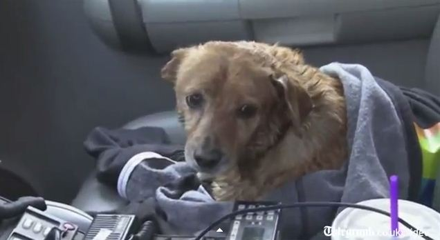 Dog Rescued from LA River Still Looking for His Home
