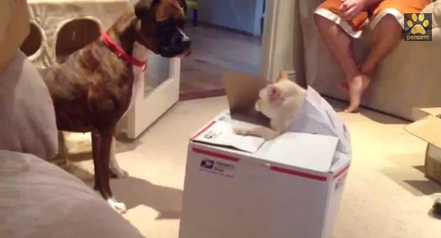 Bella Gets a Big Surprise!
