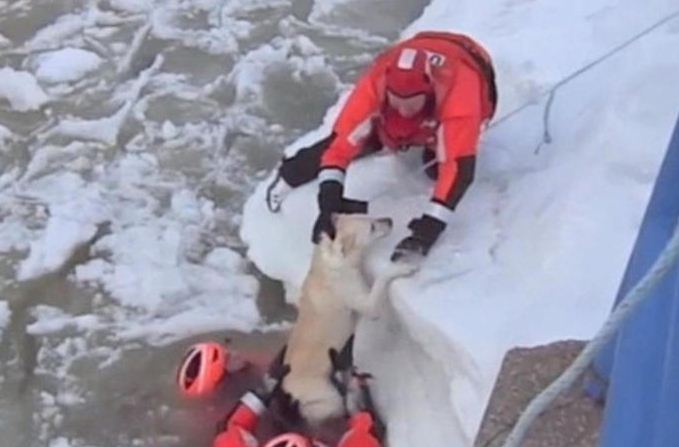 He obviously just wanted to chill out! Watch as lucky Labrador is rescued by Coast Guard after getting trapped in frozen Michigan lake