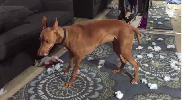 Video: Dog Has Too Much Fun Playing