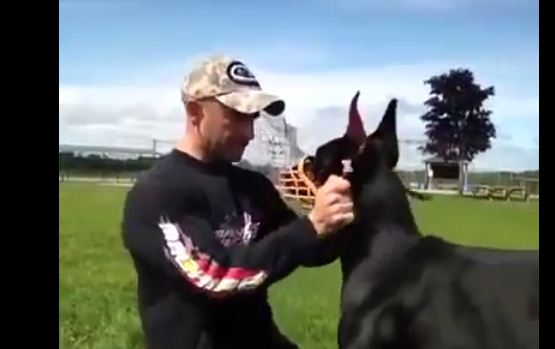 This Dog Is Perfectly Trained, But The Last Command He Gets Will Melt Your Heart