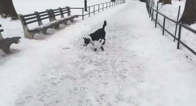 Here's What Happens When You Laugh At Your Dog for Slipping in The Snow. Instant Karma!