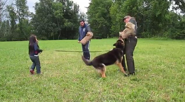 "Watch How This German Shepherd Reacts When 2 ""Bad Guys"" Threaten This 5 Year Old Girl"