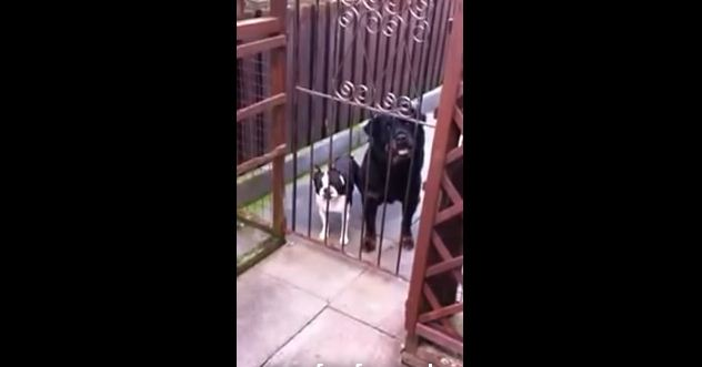 """When This Guy Says """"Hello"""", Watch What The Dog On The Left Does. CRAZY!"""