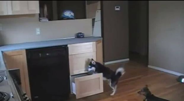 Problem Solving Dog Finds Hidden Treats