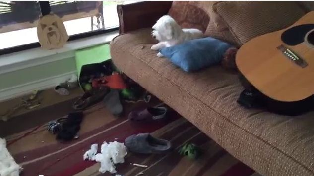 He Comes Home To A Mess! At 0:32 You'll See Who Did It!