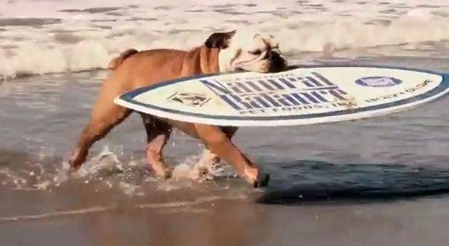 This Multi-Talented Bulldog Will Make You Feel Unathletic