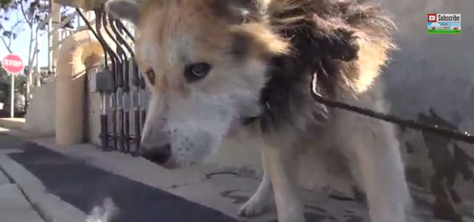 A Sad Senior Dog Was Struggling To Live Near Chemical Waste Til This Daring Rescue