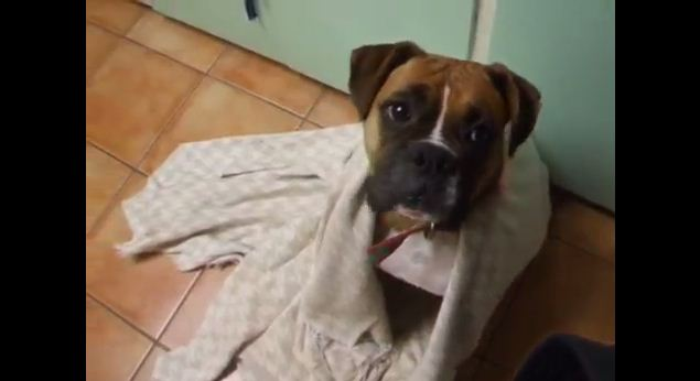 This Dog Was Freezing Cold…Her Reaction After Getting A Blanket Will Warm Your Heart