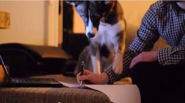 Dog Won't Let You Study