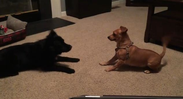 This Dog Just Met Her New Adopted Sister And Can't Hide Her Excitement