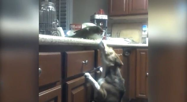 This Bird Feeding His Dog Friend Spaghetti Is Both Hilarious And Amazing