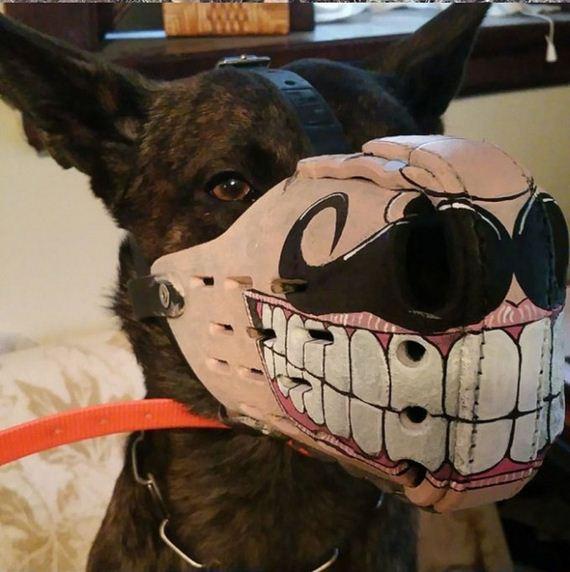 dog_10