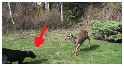A deer walked into their yard. The footage they captured stunned the world!