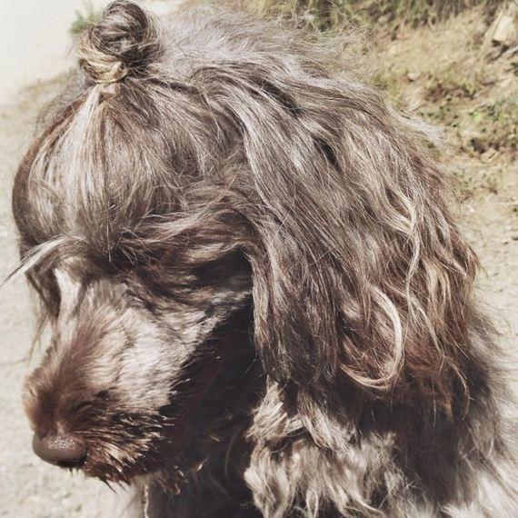 09-bun-dog