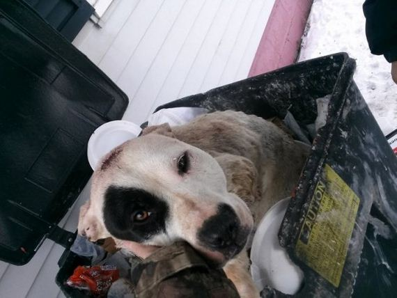 Precious, the Bait and Trash Can Dog Gets New Life