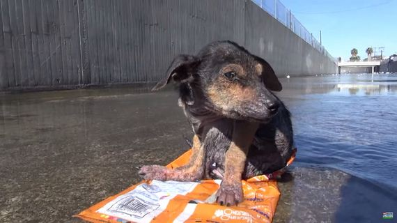 A Wet, Shivering Pup Nearly Died In This Canal – But Watch This Til The Very End