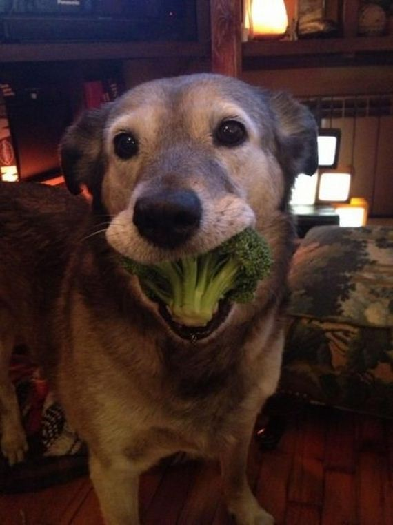 Are 10 Dogs Looking Goofy While Eating