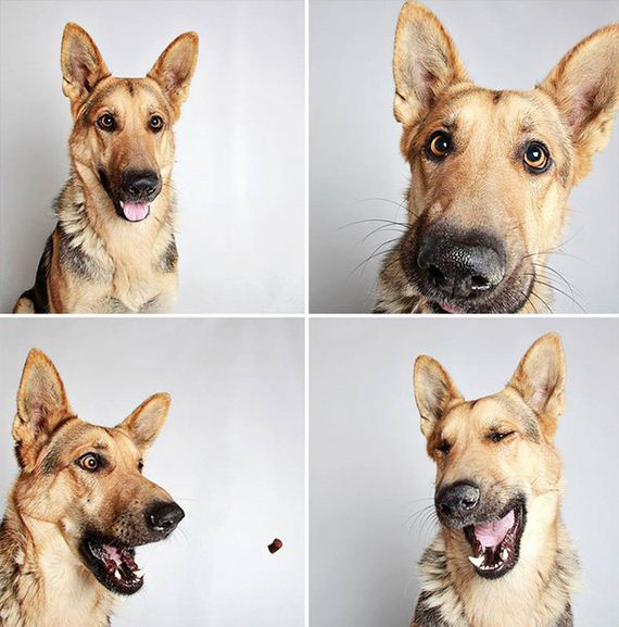 A Simple Photo Booth Changed Everything For These Previously Un-Adoptable Dogs