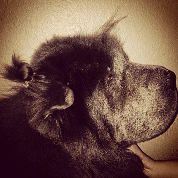 16-bun-dog