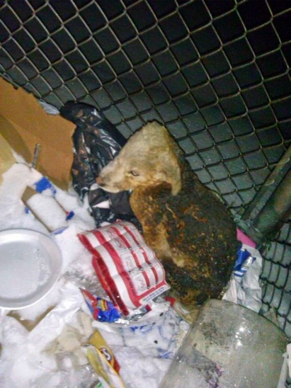 This Pup Wasn't Only Abandoned – He Was Tossed In A Dumpster And Set On Fire