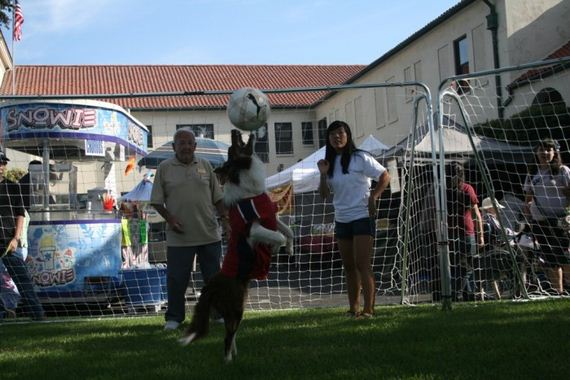 These Dogs Save Lives Through Playing Soccer