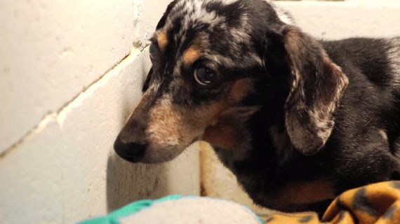 A Paralyzed Dog Was Cruelly Neglected In A Concrete Cell, But Then? You'll Love This.